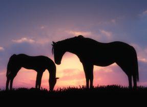 La Conexión espiritual con el caballo