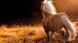 La comunicación con el caballo, un ejercicio de Humildad.