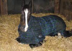 El virus de la gripe en los caballos