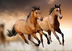 ¿CASUALIDAD O DISEÑO? Las patas del caballo