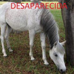 YEGUAS DESAPARECIDAS