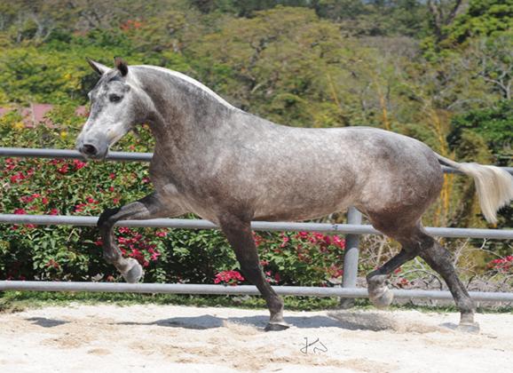 Microchip en los caballos = Seguridad