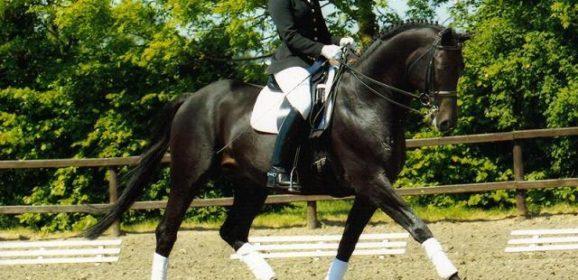 """Cómo muscular un caballo: Su """"motor"""" es el tercio posterior"""