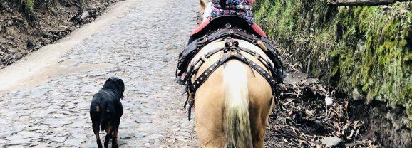 El gran error de los padres al comprar un nuevo caballo a su hijo