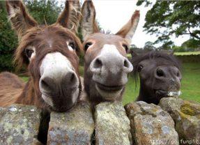 Aunque no lo creas los burros también se están extinguiendo