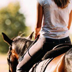 Estado de alarma: ¿Qué debes hacer cuando te reencuentres con tu caballo? Aspectos claves para cuando acudas a ver a tu caballo por primera vez después del confinamiento. Reacciones, dolencias, monta. Bienestar ¡ante todo!