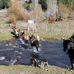 A caballo y mulas: militares entregan canastas de alimentos a vecinos de Lonquimay