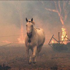 Más de 480 millones de animales perdieron la vida en incendios en Australia