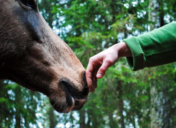 Psicología Equina: ¿Cómo ayudar a un caballo con miedo? (Caso práctico)